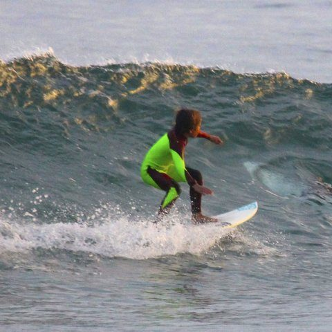 Young Surfer and Shark Share the Same Wave